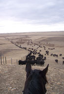 Fall Cattle Work