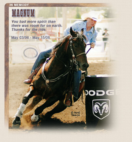 In Memory of a Great Barrel Horse - Magnum