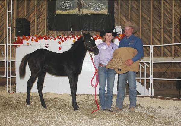 High selling horse - 2014 Cypress Hills Breeder's Sale